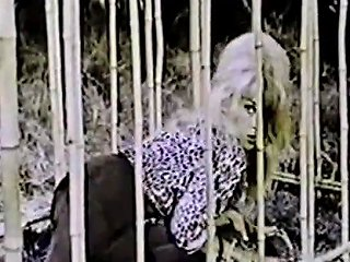 Caged Stipper Gets Frenzy In The Jungle 1960s Vintage